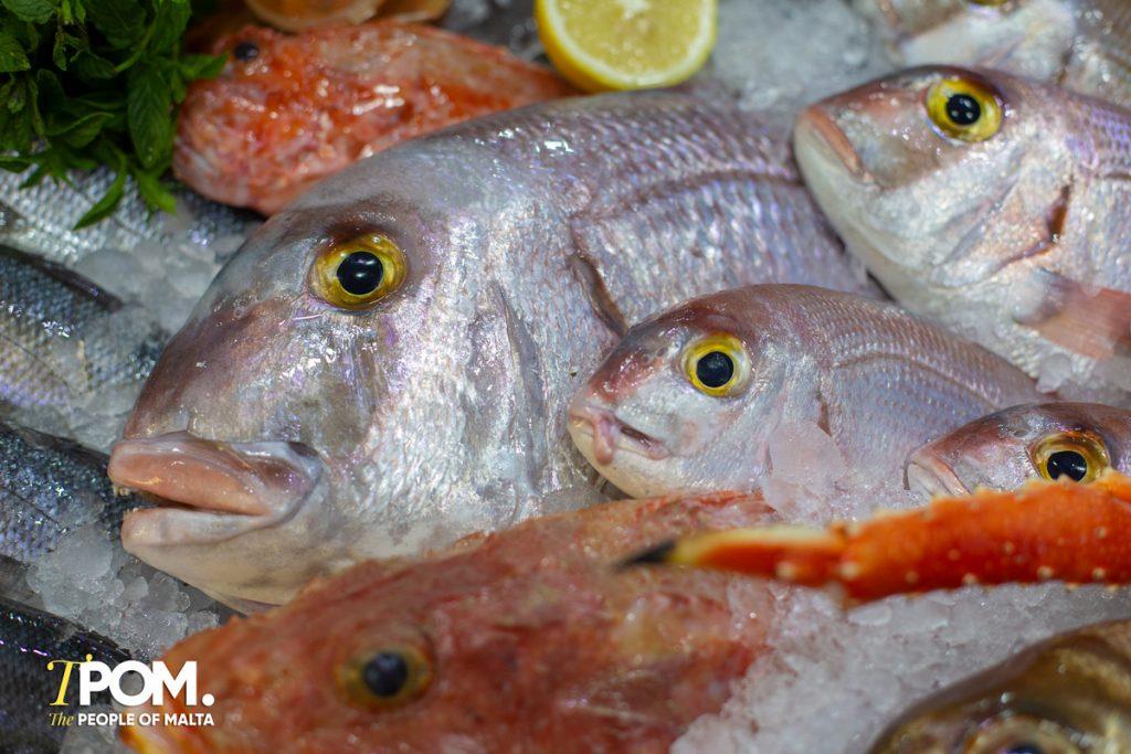 Selection of fresh fish