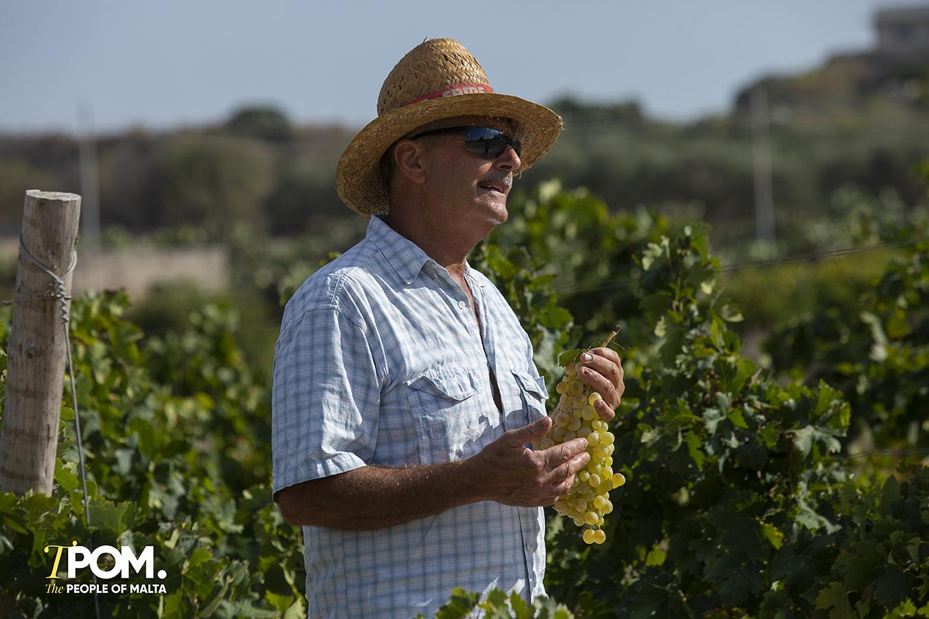 Cortis Vineyard